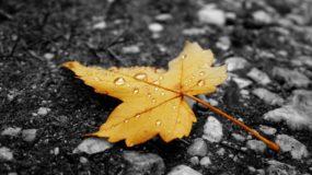 Аллах – Живой, Поддерживающий жизнь всех Своих творений